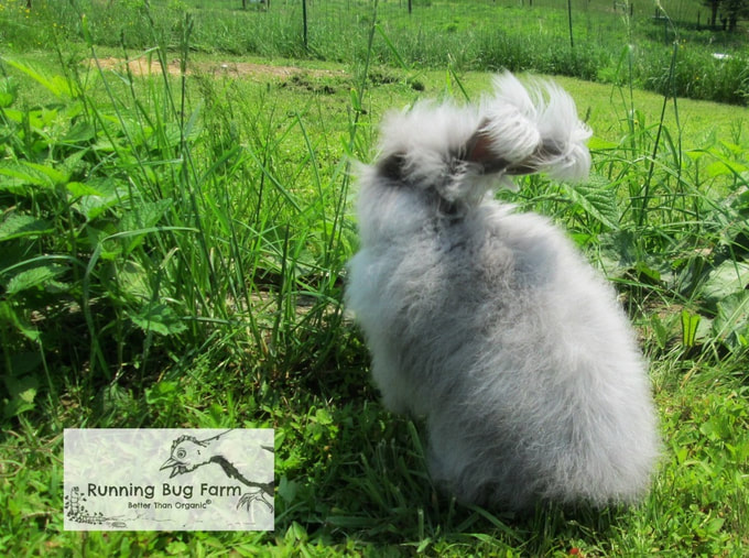 Learn how to properly care for your new angora rabbit.